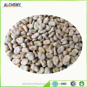 Chinese Wholesale fava bean broad bean