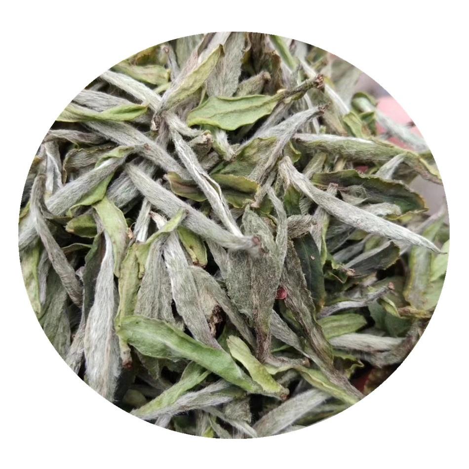 Best White Tea Brands Bai Mu Dan Organic Fuding White Tea High Mountain Ecological White Phony Tea - 4uTea   4uTea.com