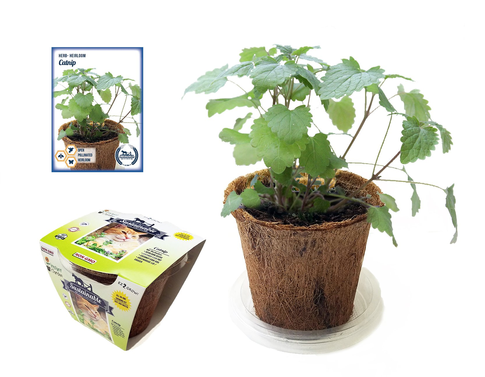 Original Pack 50 Catnip Seeds Cat Mint Nepeta Organic Herb