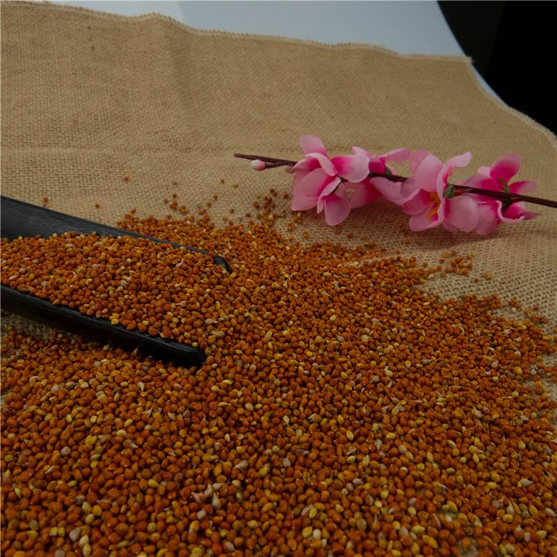Pure red millet in husk,new crop,MC type
