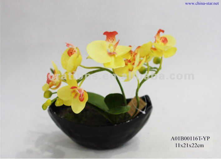 Yellow Phalaenopsis Orchid By Gee C Benson Jr