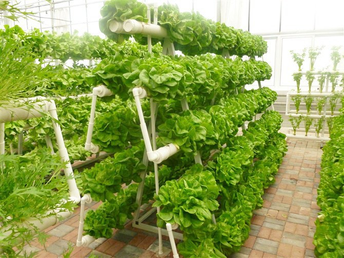 Vertical Gardening Hydroponic Grow System Hydroponics Tubes Buy