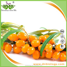 Sea buckthorn Extract Powder 12:1 Hippophae Rhamnoides Extract