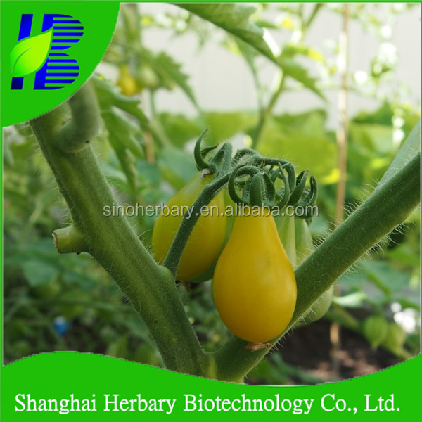 Shanghai Herbary Sale yellow pear tomato seeds for sale