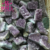 Wholesale Amethyst Specimen Crystal Amethyst Stone Rough Crystal Quartz Cluster in Hot Sale