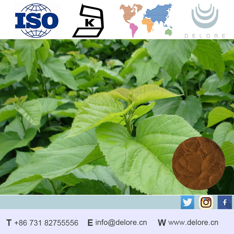 New product 1-Deoxynojirimycin(DNJ) natural organic White Mulberry Leaf P.E.
