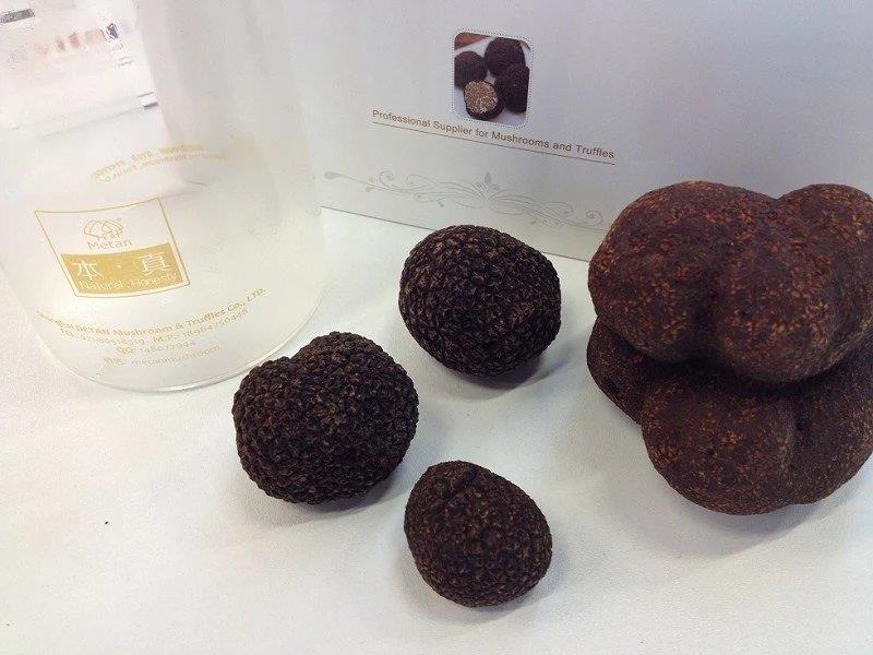 Detan Wild Black Fresh Tuber Magnatum Truffle Price