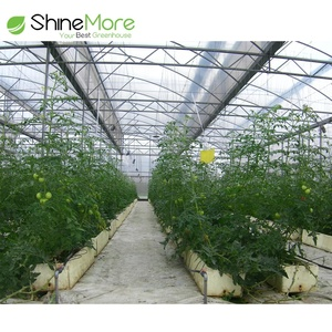 SHINEMORE Tropical Greenhouses And Commercial Hydroponic Growing Systems For Tomato, Lettuce and Strawberry