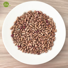 JSX gold supplier pinto beans cheap price for export china LSKB light speckled kidney beans