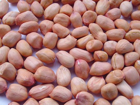 Wholesale at cheap price peanuts kernel cheap price