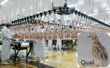 Poultry Quail Slaughter line, Quail slaughter equipment