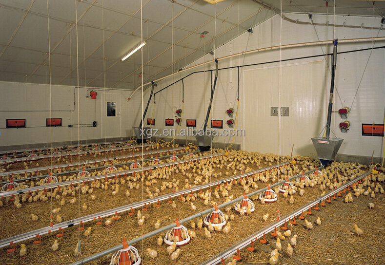 Commercial Chicken House low cost steel structure commercial chicken house for broiler