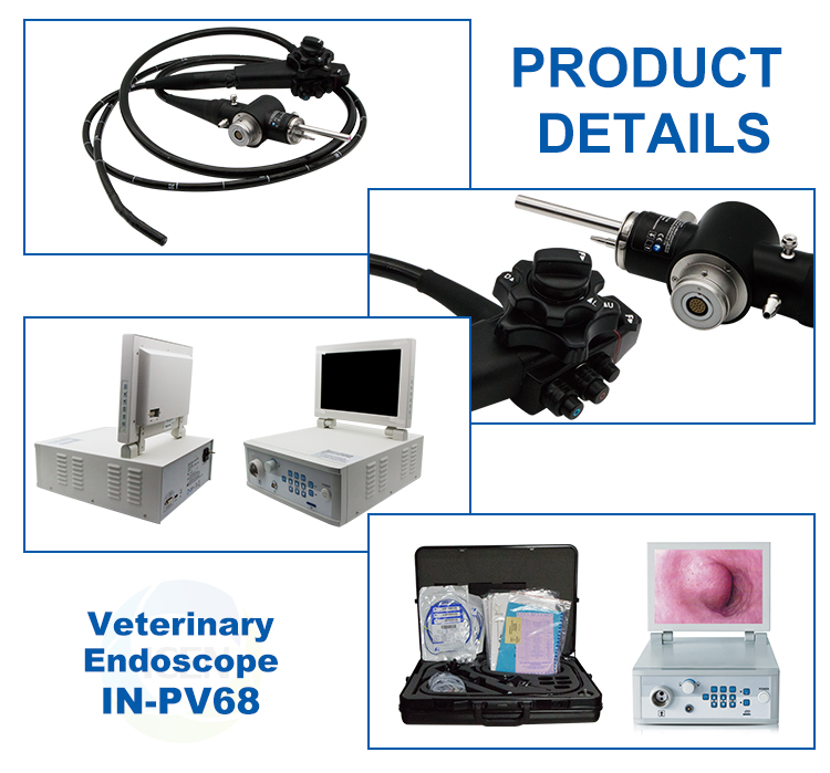 IN-PV68 Medical  Electronic   Endoscope Video Gastroscope Colonoscope Animal Endoscope