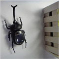 2016 New Solar Beetle Scarab Beetle Tricky Creative Educational Toys For Children Free Shipping Wholesale Halloween