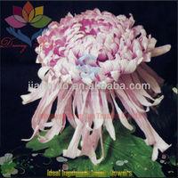 2013 beautiful paper flower handmade silk ribbon flowers