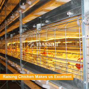 Automatic Broiler Chicken Cage with Poultry Farming Equipment for Animal Poultry Husbandry Livestock