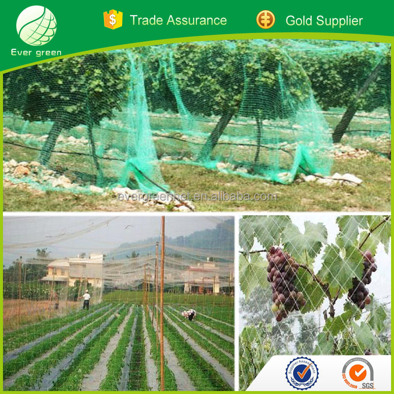 China netting products factory supply anti uv virgin protection against birds net