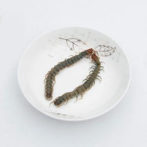 Frozen centipede for fish food