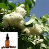 Natural plant extract Organic Clove Essential Oil with best price