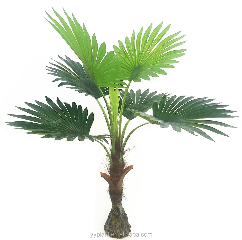 Newly Launched Small Stem Small Fan Shape Leaves Palm Tree