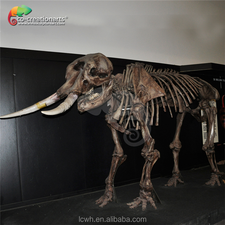indoor museum animated lively dinosaur skeleton model