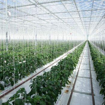 Vegetable Greenhouse Vertical Farming Systems