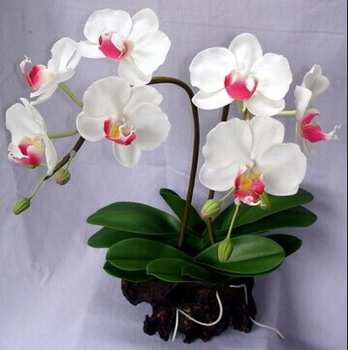 2014 sj af039 hot sale artificial white orchid for indoor decoration 2014 sj af039 hot sale artificial white orchid for indoor decoration silk orchid flowers for wedding mightylinksfo