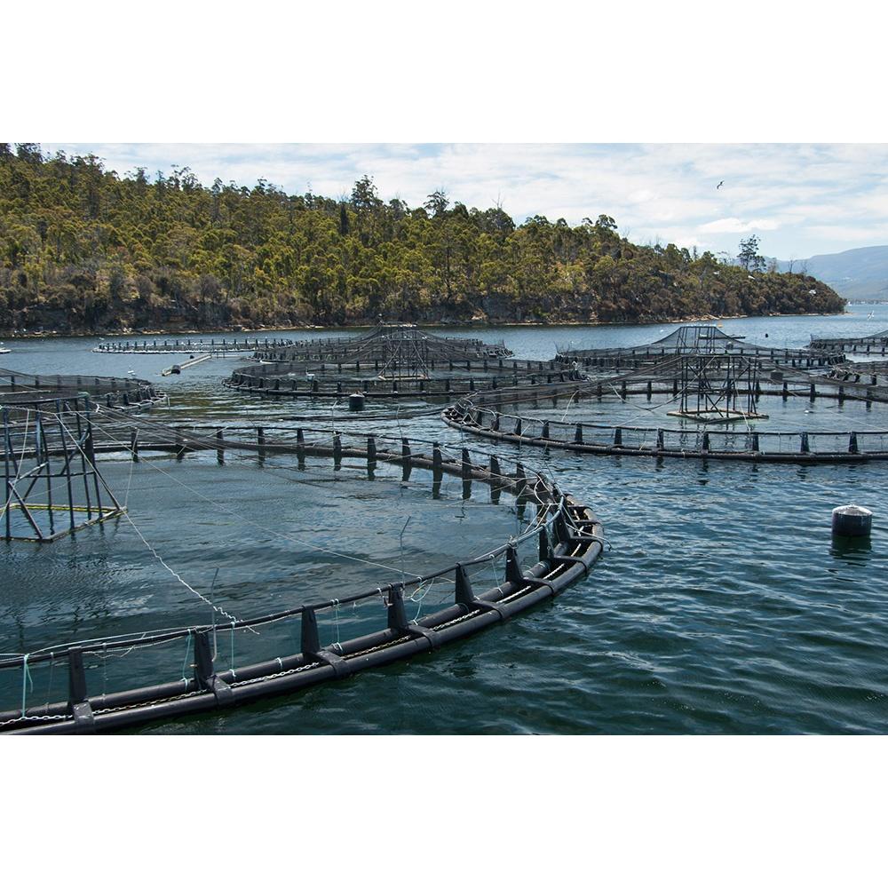HDPE braketi balık yetiştiriciliği tilapia yüzen dairesel su ürünleri balıkçılık kafesi deniz