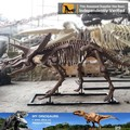 MY Dino-M19 Science museum equipment high emulation dinosaurs skeleton