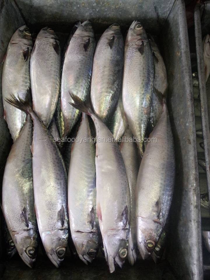 For sale seafoods seafoods wholesale suppliers product for Best way to freeze fish