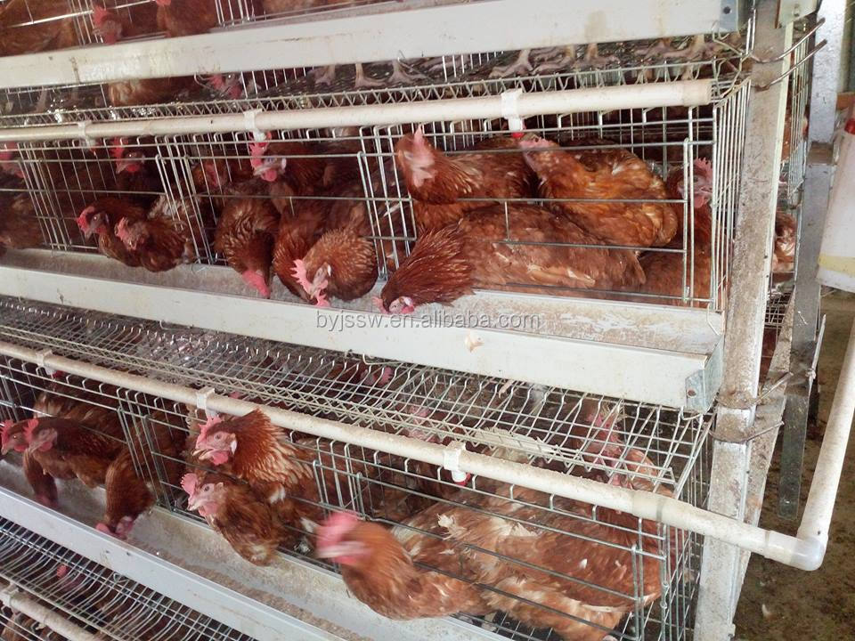 New Design Layer Poultry Cages Used In Ghana Poultry Farms