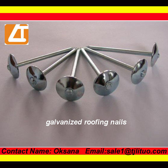Hot sale roofing nails galvanized umbrella head roofing nails bwg 9 x 2.5 inch