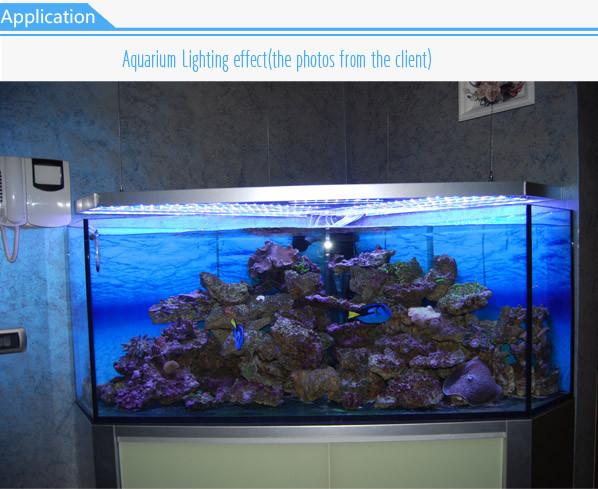 gealth 3w series waterproof aquarium led beleuchtung buy aquarium led beleuchtung waterproof. Black Bedroom Furniture Sets. Home Design Ideas