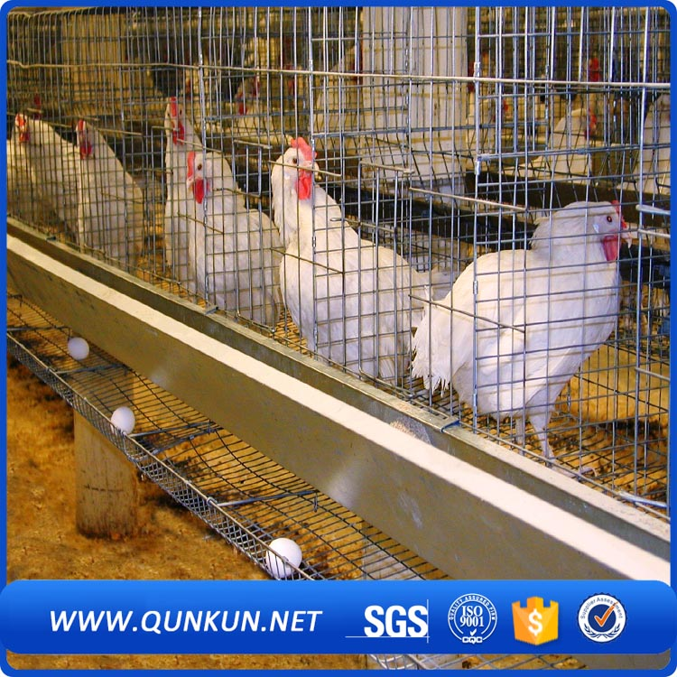 Alibaba China poultry farm automatic chicken layer cage/ layer poultry farms/battery cages laying hens