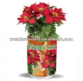 Poinsettia Tin Can With Seeds And Growing Medium Buy Poinsettia