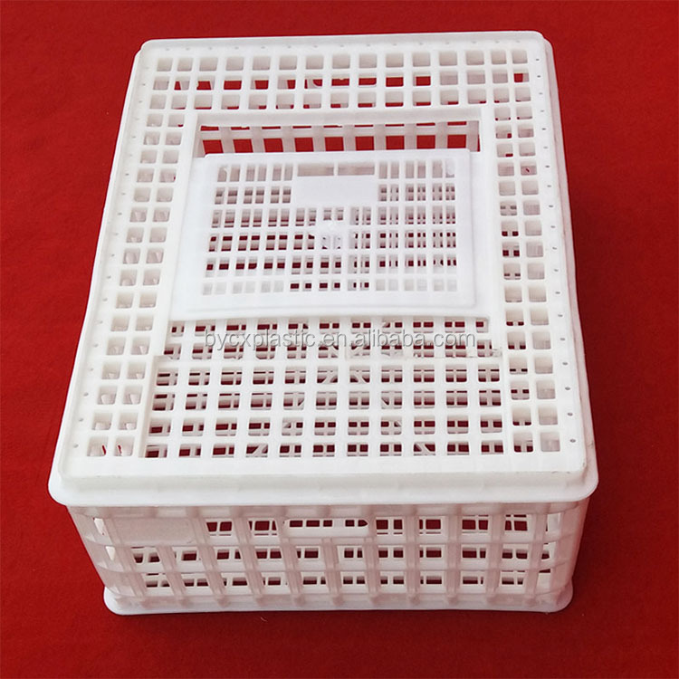 Short square pigeons, rabbits, quails plastic transport crate