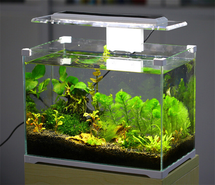 Aquarium sunsun low iron glass cube garden mini fish tank for How to win money at fish tables