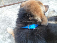 Dog Lead/ Pet Collars/ Pet Leashes