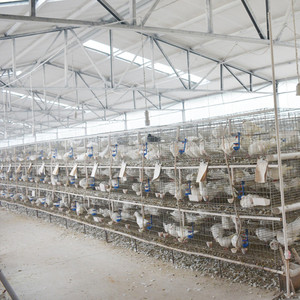 high quality European standard pigeon breeding cage