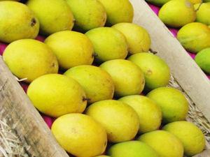 Pakistani Mangoes for Canada