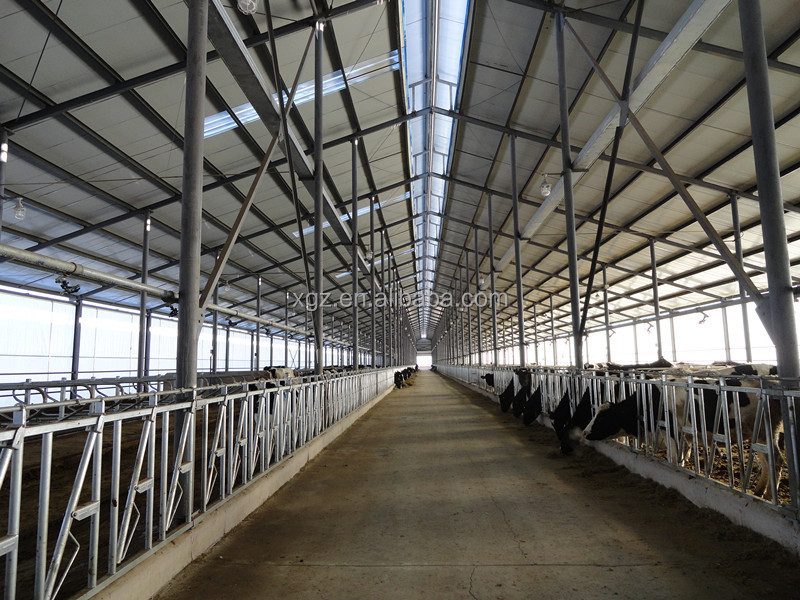 prefab dairy cow shed /houses