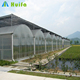Large Size China Industrial Tomato Greenhouses