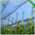 HDPE orchard apple tree anti hail net, Hail proof Anti-hail net for vinyard