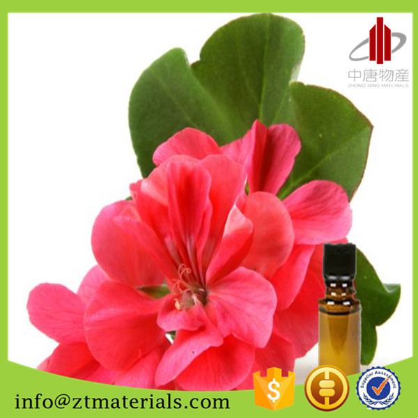 Pelargonium Odorantissimum in bulk from Chinese Supplier