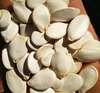 2017 new crop Snow White Pumpkin Seeds , 11cm 13cm 13mm