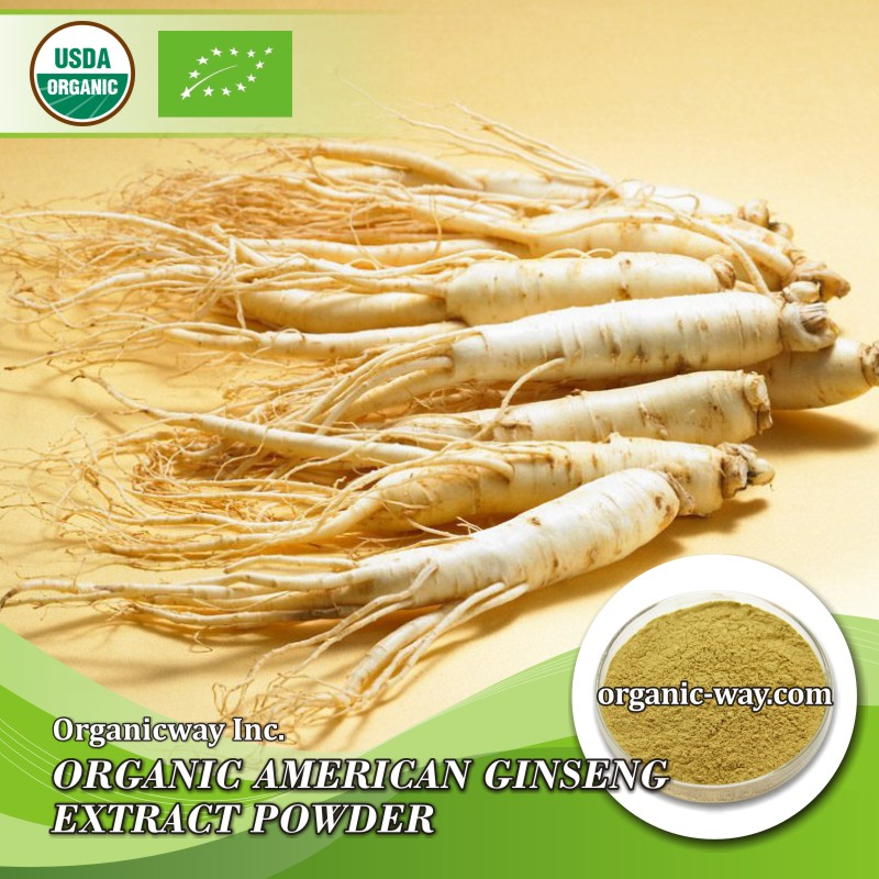 2017 New wholesale american ginseng