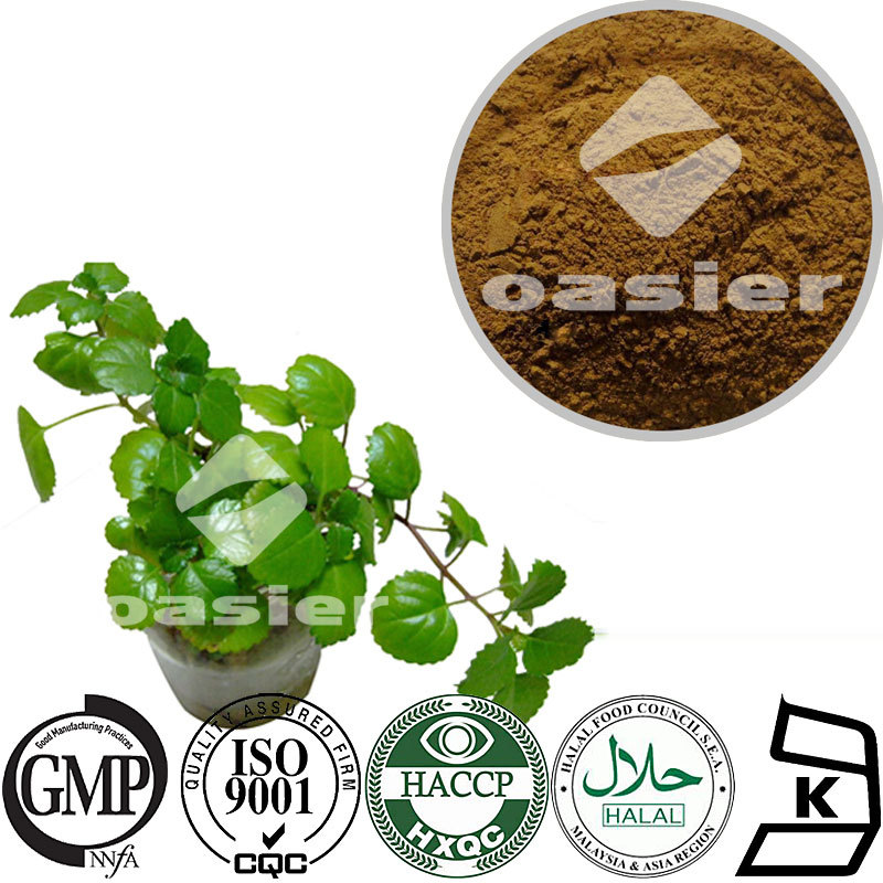 High quality natural ivy leaf extract HPLC 5% to 10%Hedera coside C Helix Extract with ISO Kosher Certificate
