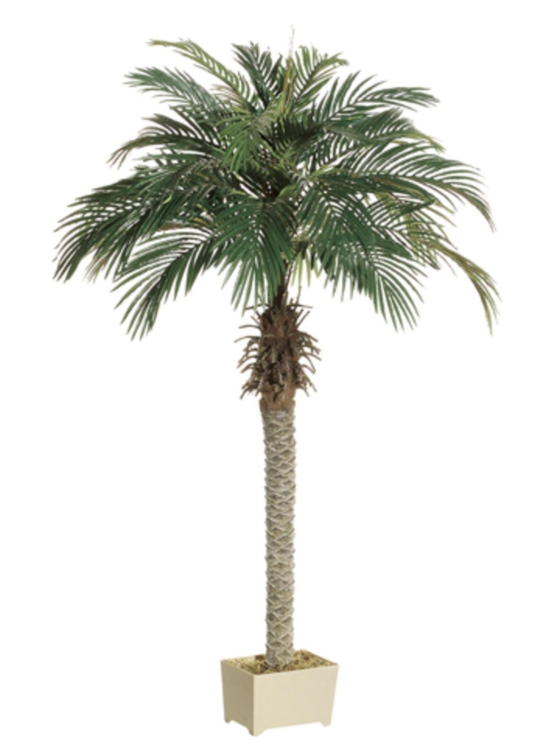 Pack of 2 Potted Artificial Silk Phoenix Palm Trees 6'