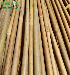 High quality tea dried bamboo, hard texture, also known as iron bamboo