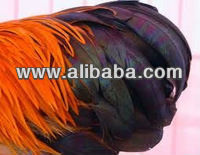 Pheasant Feather for wholesale